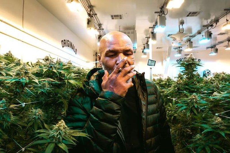 Shitja e drogës i garanton miliona Mike Tyson, zbulohet fitimi