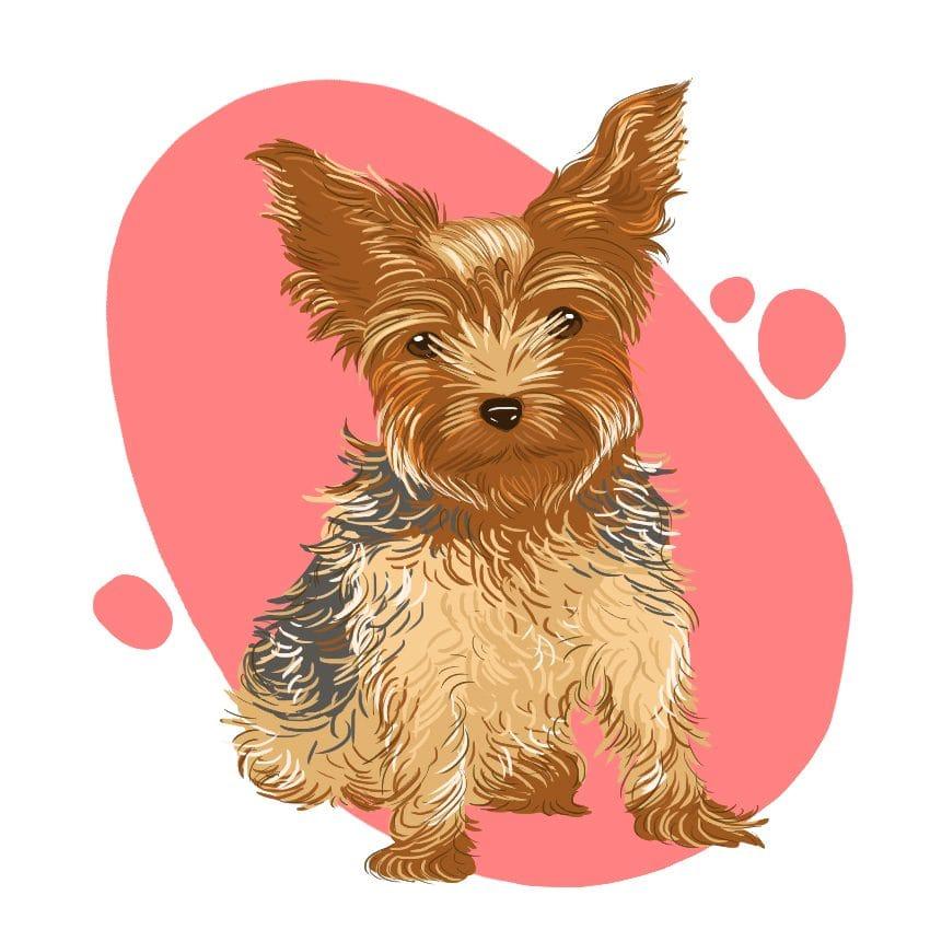 embeddedIMG 14 Dog Breeds That Dont ShedAre Hypoallergenic 850px 11 850x850