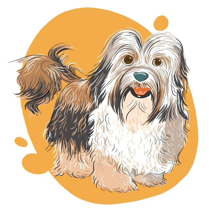 embeddedIMG 14 Dog Breeds That Dont ShedAre Hypoallergenic 850px 12 850x850