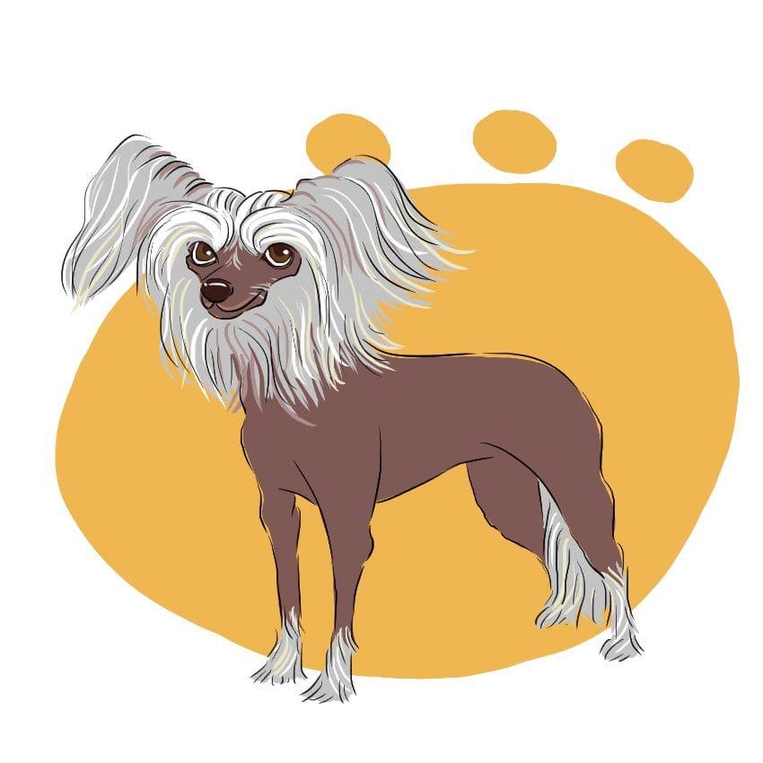 embeddedIMG 14 Dog Breeds That Dont ShedAre Hypoallergenic 850px 14 850x850