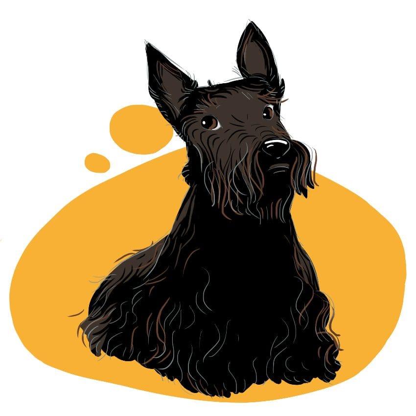 embeddedIMG 14 Dog Breeds That Dont ShedAre Hypoallergenic 850px 4 850x850