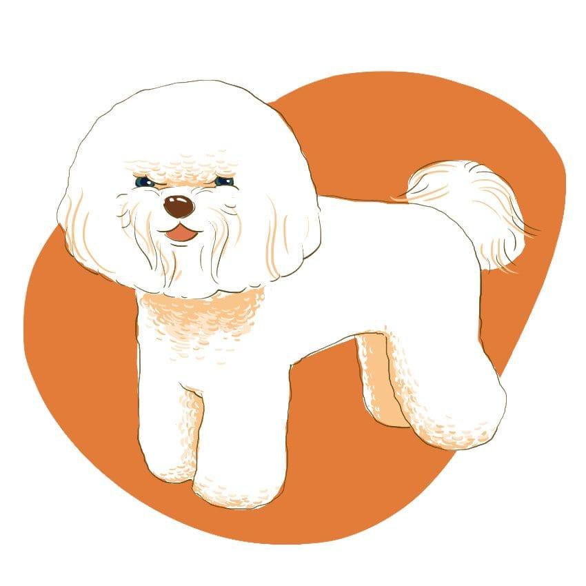 embeddedIMG 14 Dog Breeds That Dont ShedAre Hypoallergenic 850px 7 850x850