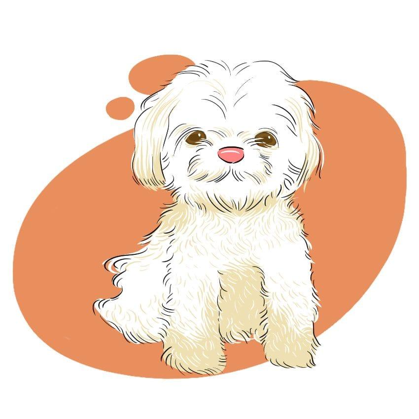 embeddedIMG 14 Dog Breeds That Dont ShedAre Hypoallergenic 850px 8 850x850