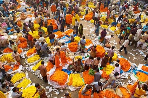 orange yellow marigolds india.ngsversion.1474472487765.adapt.1190.1