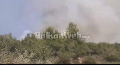 VIDEO/ Zjarr i fuqishëm në kodrat me pisha në Mamurras,