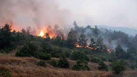 Vatra të shumta zjarri në kodrinat e Mamurrasit, forca të shumta