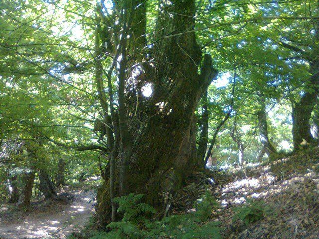 E rëndë, bie nga pema, ndërron jetë 17-vjeçarja