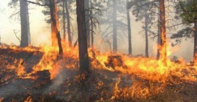 LAJMI FLASH/ Zjarret në rajon, BE aktivizon mekanizmat e emergjencës