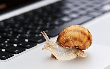 Çfarë po jua ngadalëson internetin në shtëpi dhe si