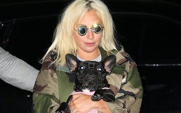 Shëtitësi i qenve të Lady Gaga-s qëllohet me armë dhe