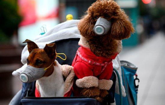 Kontrolli për koronavirus: Testi ndaj qenushit rezulton pozi...