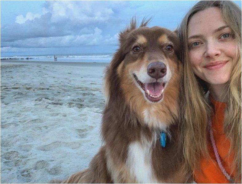 Shkenca shpjegon pse qentë ngjajnë me ju