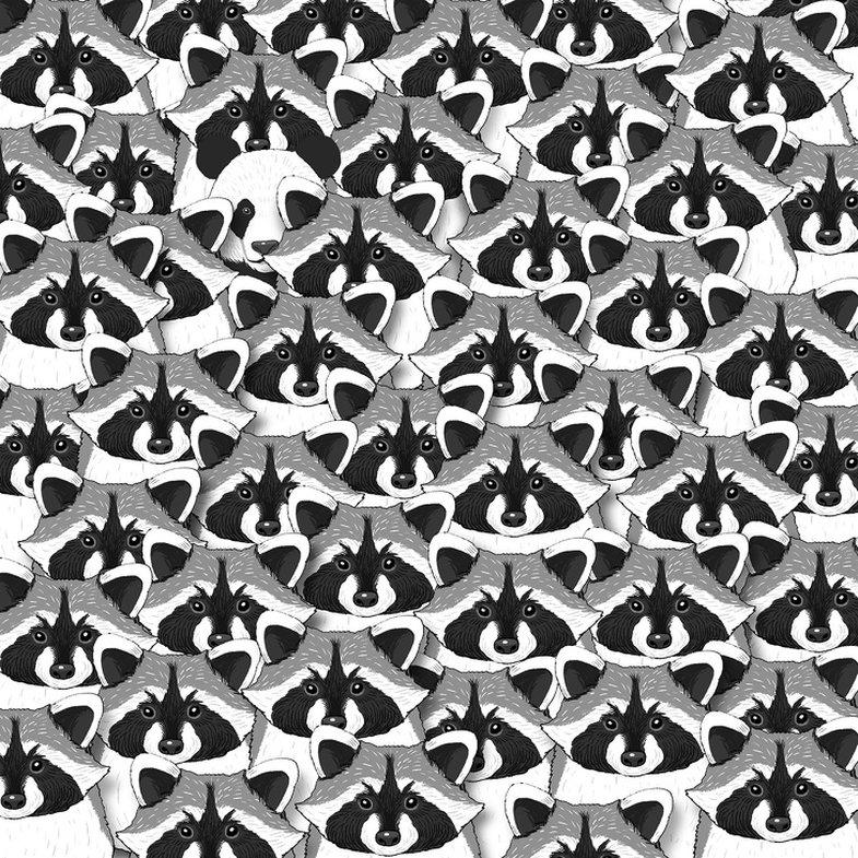 Quiz: Sa shpejt mund t'i gjeni objektet në foto?
