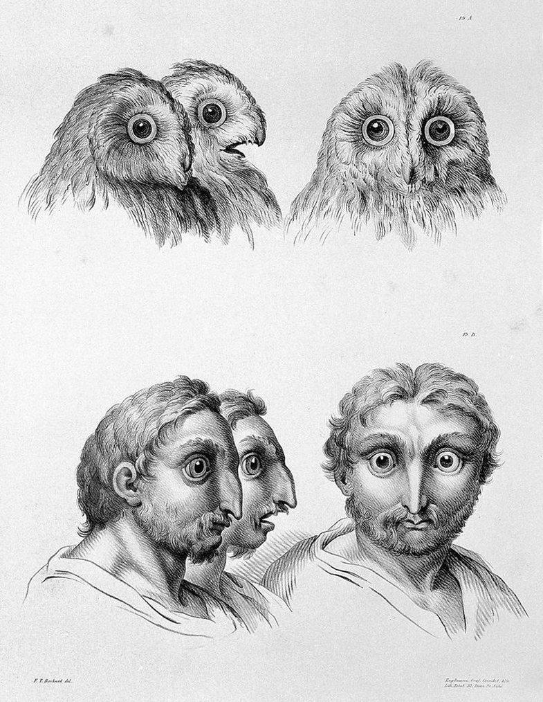 Si mund të dukeshim sot, nëse do ta kishim origjinën nga specie