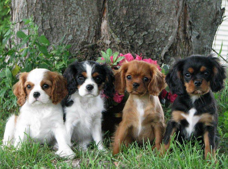 15 qentë më të mirë për familjet me ose pa