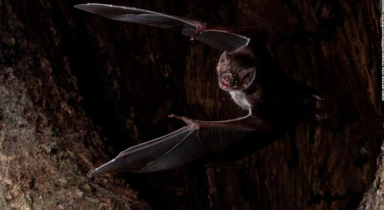 Social distancing may be a new concept for us, but not for bats