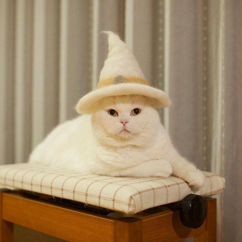 'Macja dhe kapelet': Sipas sondazhit, vetëm 36% e njerëzve