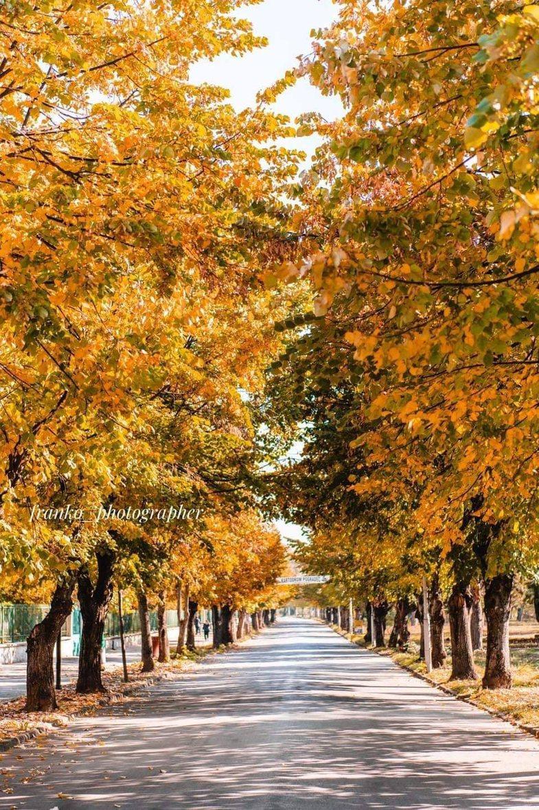 Disa nga rrugët më të bukura nëpër Shqipëri