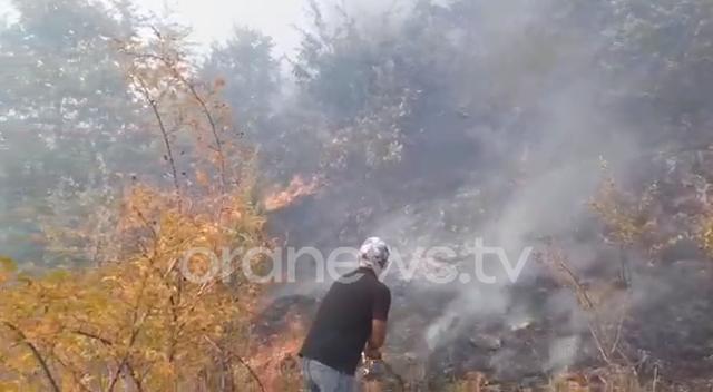 Pogradec, zjarri përshin pyllin e fshatit, zjarrfikësit dhe