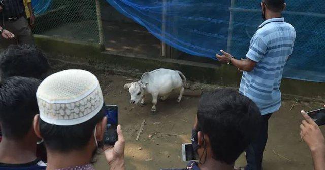 Rani, lopa xhuxhe  më e vogël në botë, 51 cm e lartë