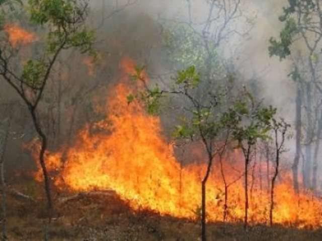 Shkodër/ Shuhet zjarri në Okol, u dogjën dëllinja dhe