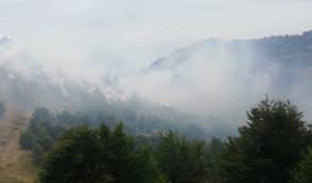Zjarr në Qafë Mali, rrezikoheshin dy shtëpi, ndërhyn