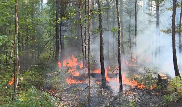 Siberia në flakë/ 4.2 milion hektarë nën zjarr,