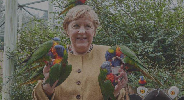Foto/  Kur papagalli kafshoi Merkelin që tentoi  ta ushqente