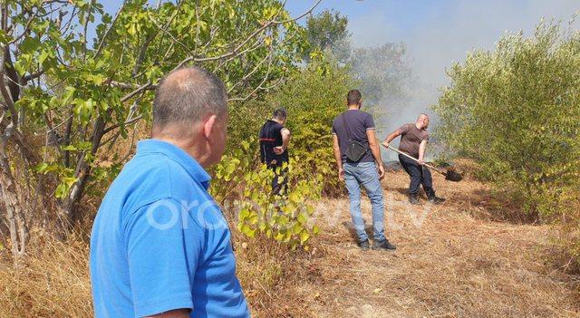 Zjarr në Berat, digjen dhjetëra ha plantacione me fiq e ullinj,