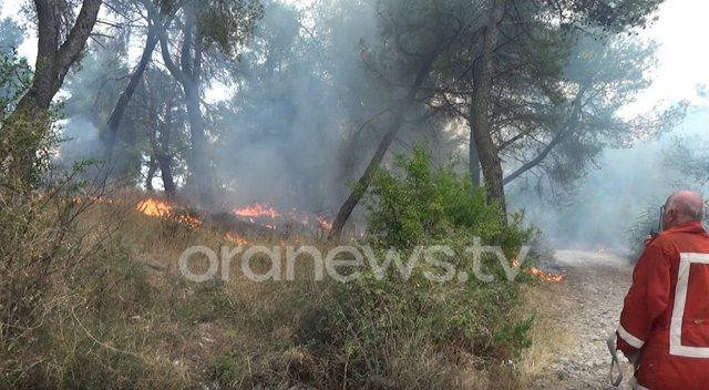 Shkodër/ Përfshihet nga zjarri Mali i Taraboshit, digjen pyje e