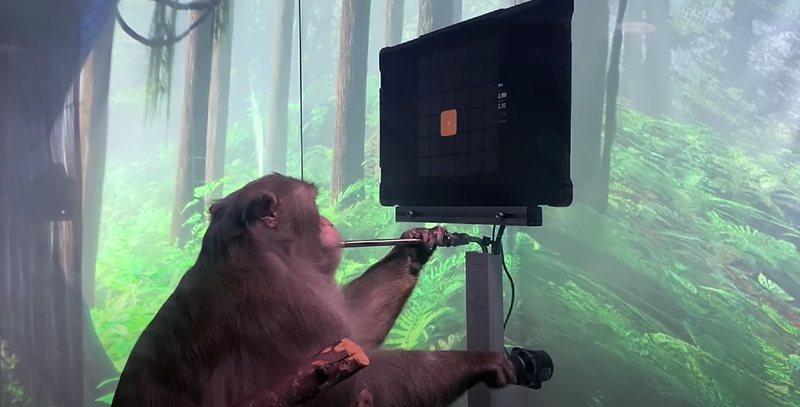 VIDEO/ Majmuni luan video-lojëra duke përdorur trurin e tij, ideja e