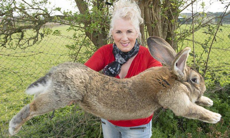 Grabitet lepuri më i madh në botë, pronarja jep £1,000