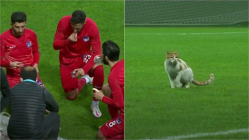 Macja u hyn në fushë, futbollistët ndalojnë lojën