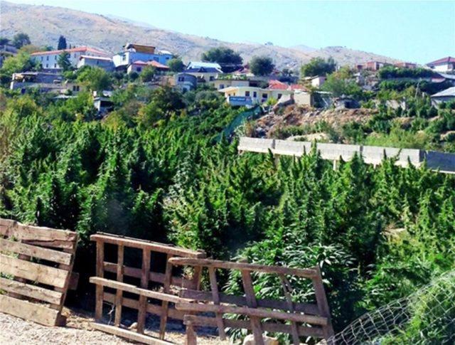 Media greke: E pamundur të kontrollosh në kufi hashashin që vjen