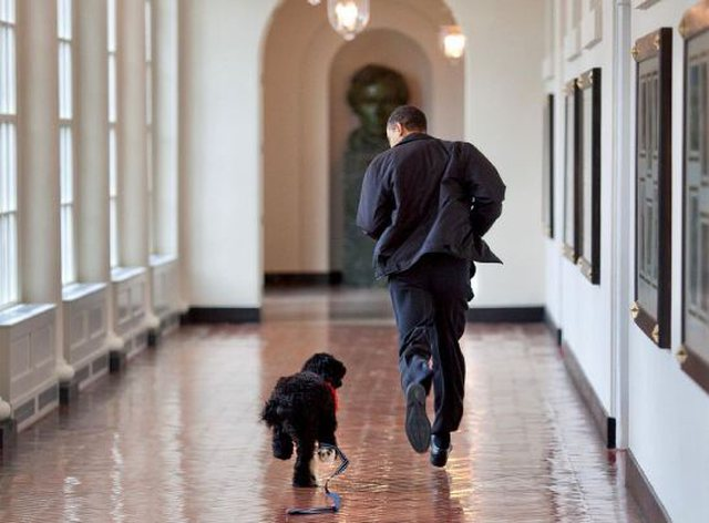 Presidential puppy loses battle with cancer, Obama: We said goodbye to our best