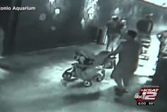 Peshkaqeni rrëmbehet nga akuariumi me karrocë fëmijësh