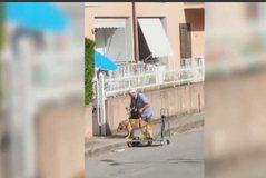Itali, qeni i tij është i sëmurë dhe nuk arrin të