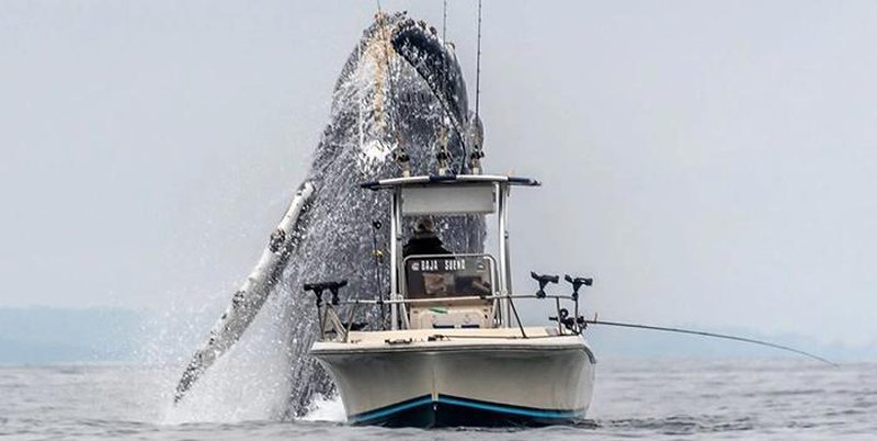 Balena befason peshkatarin, këto foto po 'çmendin' rrjetin