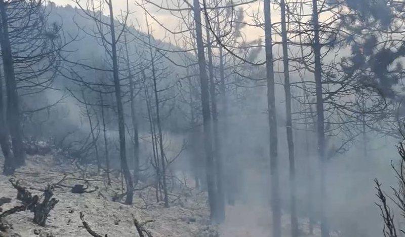 Shtohen zjarret në territor, 1 mijë hektar pisha të shkrumbuara