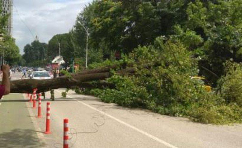 Rrëzohen pemët, bllokojnë rrugën dhe dëmtojnë