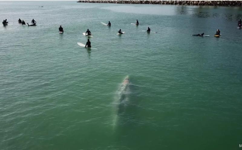 """Pamje drithëruese, balena blu gjigante """"viziton"""""""
