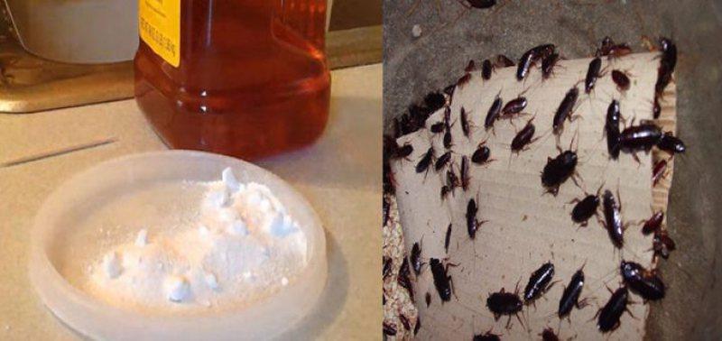 Prania e insekteve në shtëpi po jua bën jetën të