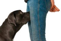 Pse qentë nuhasin vendet intime të njerëzve? Arsyeja
