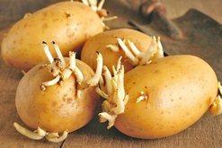 A mund t'i konsumojmë patatet me sytha? Zbuloni nëse i