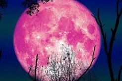 Misteri i hënës rozë, vendet fatlume që do të