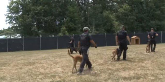 Ushtria gjermane stërvit qentë detektivë për të gjetur