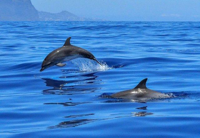 Videoja fantastike nga bregdeti shqiptar, delfinët dhurojnë