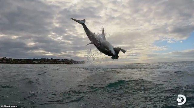 Pamje spektakolare/ Peshkaqeni bën kërcimin rekord (FOTO)