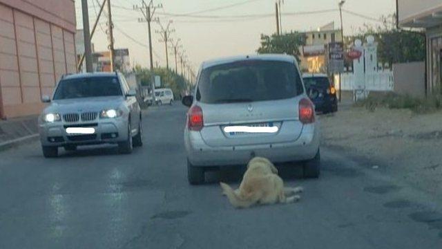 Tërhoqi qenin zvarrë me makinë, vjen lajmi i keq për