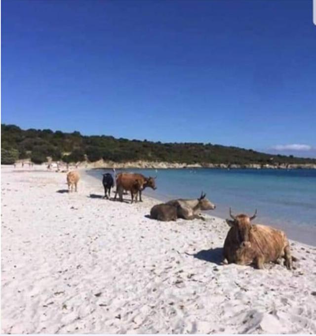 """""""Njerëzit në shtëpi ndërsa lopët në"""